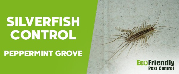 Silverfish Control  Peppermint Grove