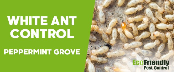 White Ant Control  Peppermint Grove