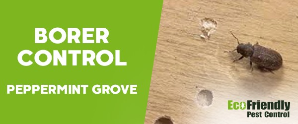 Borer Control  Peppermint Grove