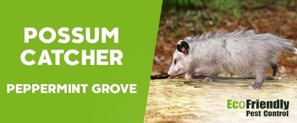 Possum Catcher  Peppermint Grove