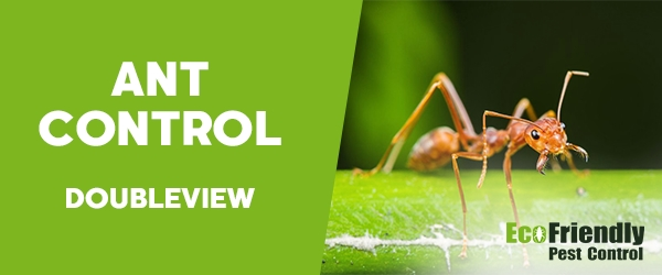 Ant Control Doubleview