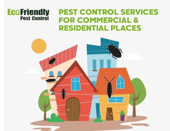 Pest Control Doubleview