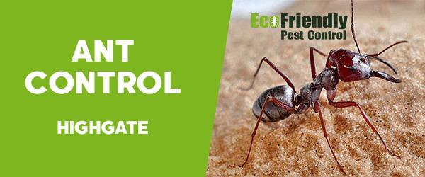 Ant Control  Highgate