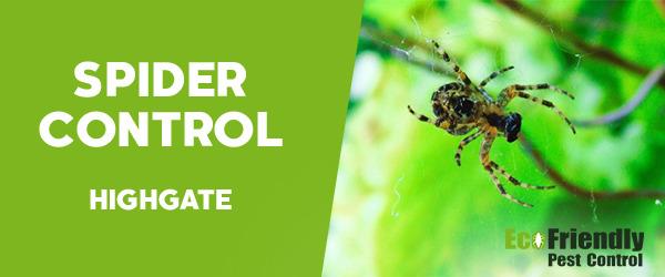 Spider Control  Highgate