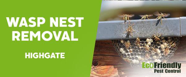 Wasp Nest Remvoal  Highgate