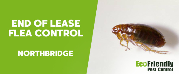 End of Lease Flea Control  Northbridge