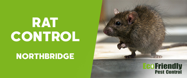 Rat Pest Control  Northbridge