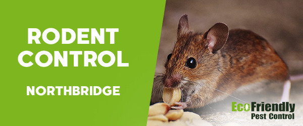 Rodent Treatment  Northbridge