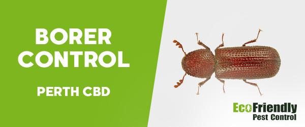 Borer Control  Perth Cbd