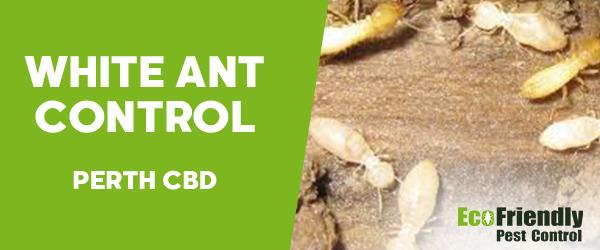 White Ant Control  Perth Cbd