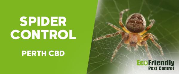 Spider Control  Perth Cbd