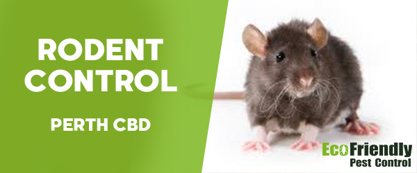 Rodent Treatment  Perth Cbd