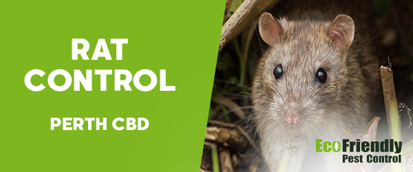 Rat Pest Control  Perth Cbd
