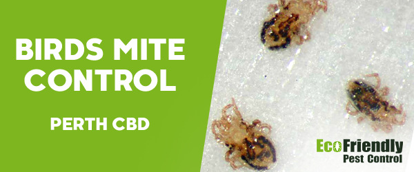 Bird Mite Control  Perth Cbd