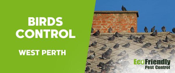 Birds Control  West Perth