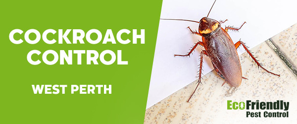 Cockroach Control  West Perth