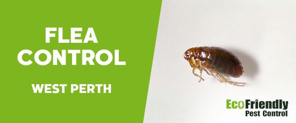 Fleas Control  West Perth