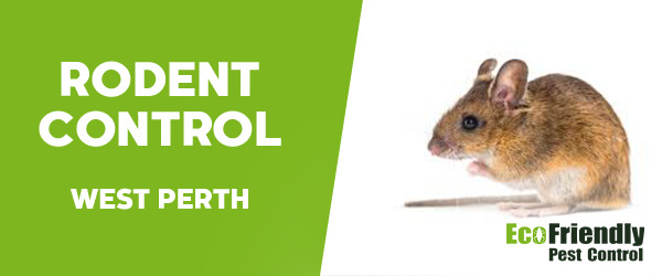 Rodent Treatment  West Perth