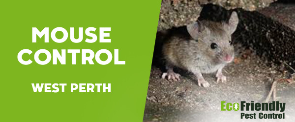 Mouse Control  West Perth
