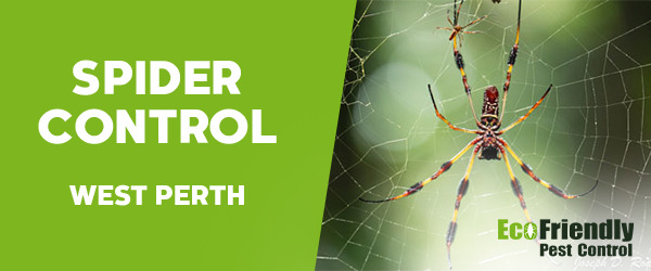 Spider Control  West Perth
