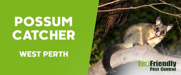Possum Catcher  West Perth