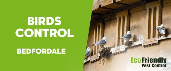 Birds Control  Bedfordale