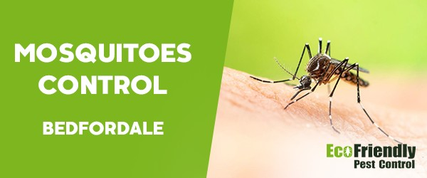 Mosquitoes Control  Bedfordale