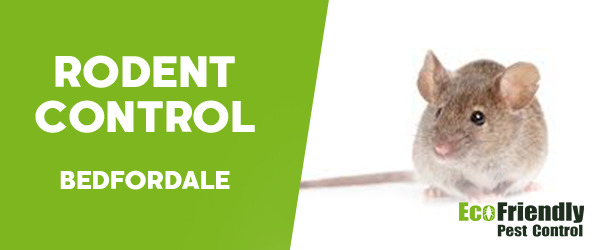 Rodent Treatment  Bedfordale
