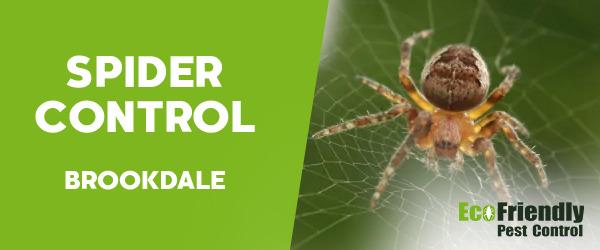 Spider Control  Brookdale