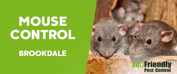 Mouse Control  Brookdale