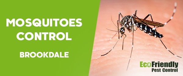 Mosquitoes Control  Brookdale