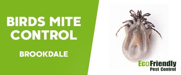 Bird Mite Control  Brookdale