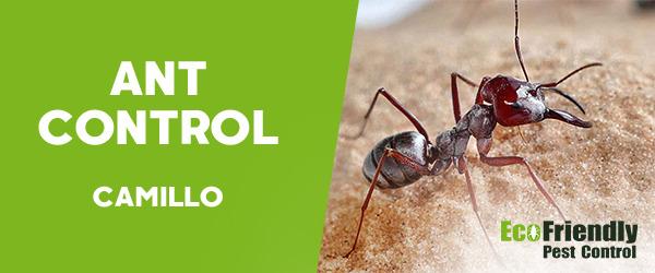 Ant Control  Camillo
