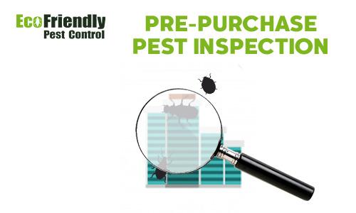 Pre-purchase Termite Inspection  Camillo
