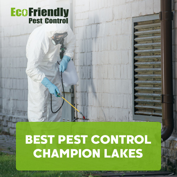 Best Pest Control Champion Lakes