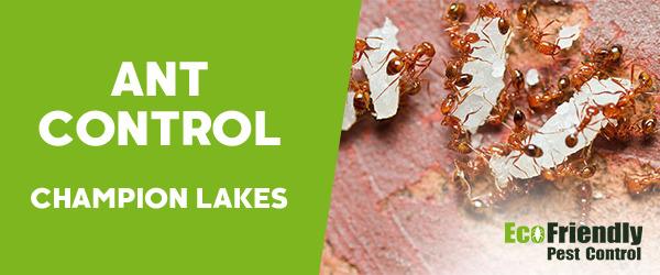 Ant Control Champion Lakes