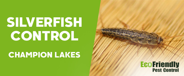 Silverfish Control Champion Lakes