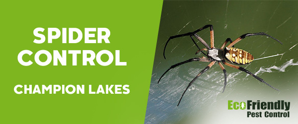 Spider Control Champion Lakes