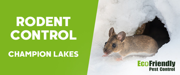 Rodent Treatment Champion Lakes
