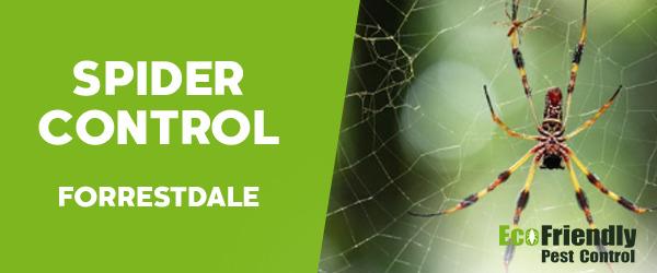 Spider Control  Forrestdale