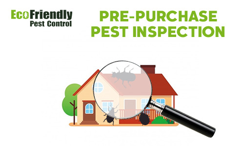 Pre-purchase Termite Inspection  Forrestdale
