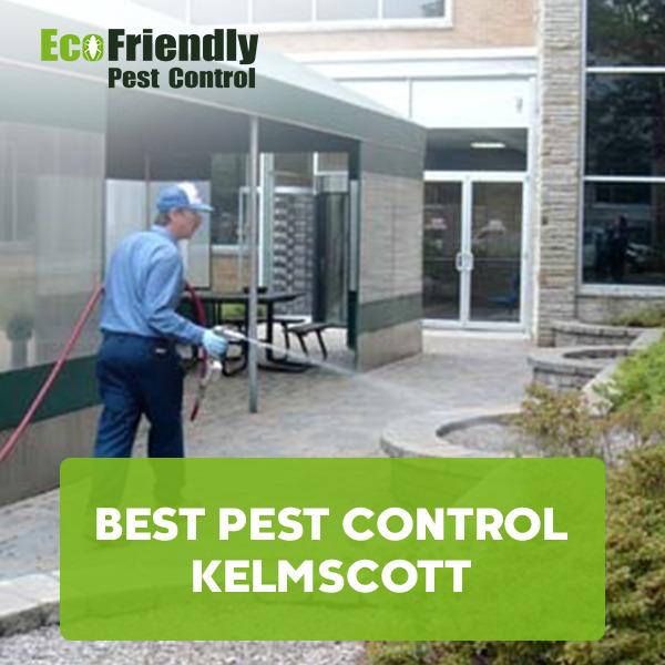 Best Pest Control  Kelmscott
