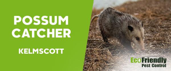Possum Catcher  Kelmscott