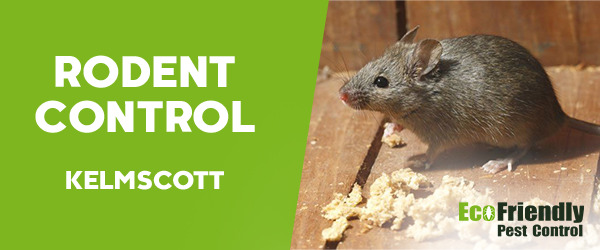 Rodent Treatment  Kelmscott
