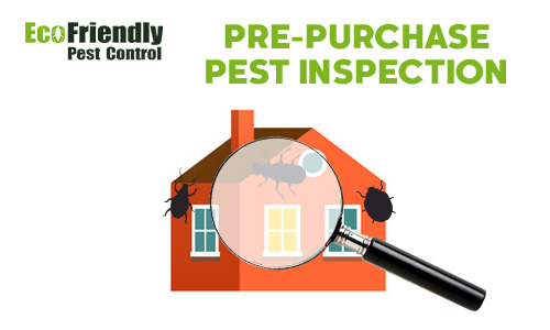 Pre-purchase Termite Inspection  Kelmscott