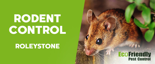 Rodent Treatment  Roleystone