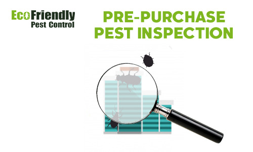 Pre-purchase Termite Inspection  Roleystone