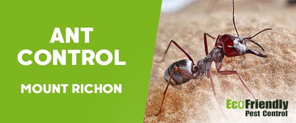 Ant Control Mount Richon