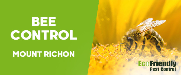 Bee Control Mount Richon