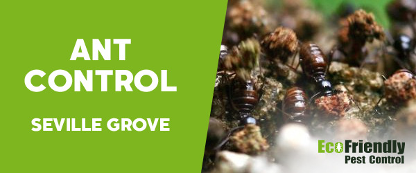 Ant Control  Seville Grove